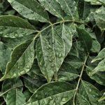 Navimol - Nahrungsergänzungsmittel aus der Natur