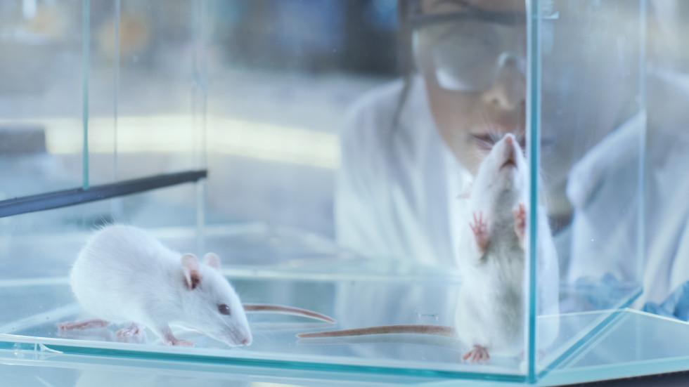 Einfluss der Aminosäure Tryptophan auf Multiple Sklerose