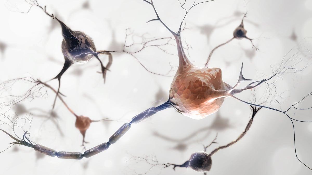Nervenzellen mit Myelinscheide