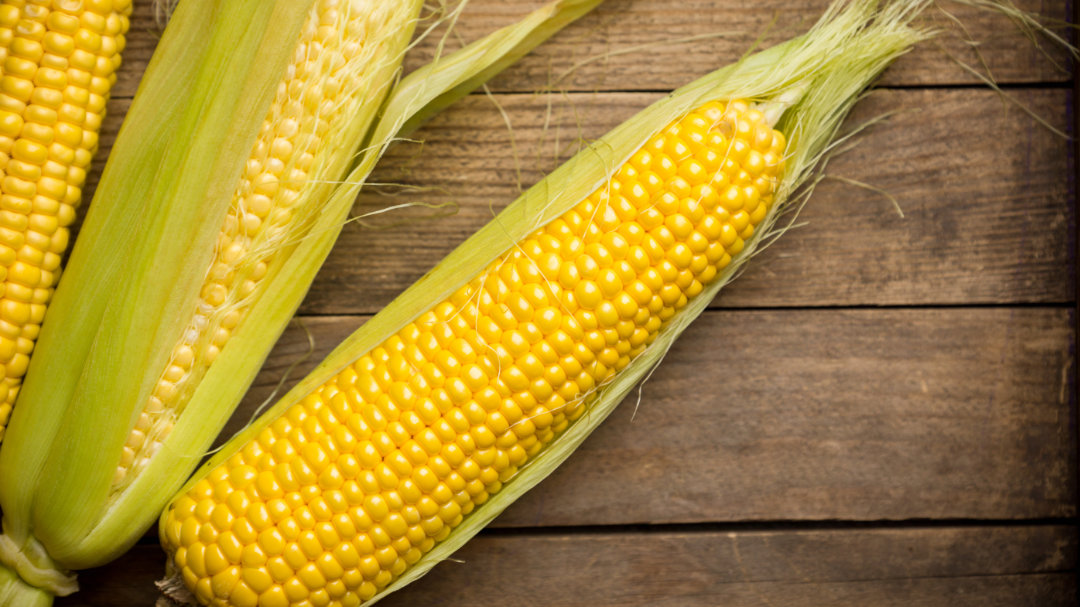 Mannose für Nahrungsergänzungsmittel wird oft aus Mais gewonnen