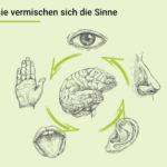 Bei der Synästhesie vermischt sich die Sinneswahrnehmung im Gehirn