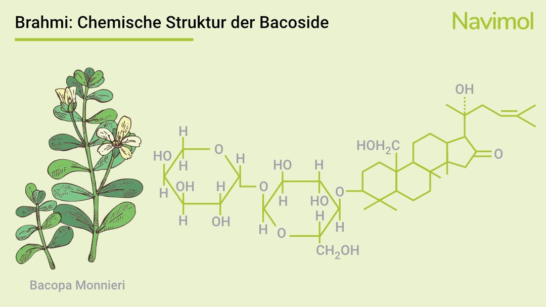 Die chemische Struktur der Bacoside in Bacopa Monnieri.