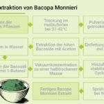 Der Prozess der Extraktion der Bacoside aus Bacopa Monnieri.